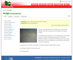 Pez lápiz (Ariosoma balearicum)