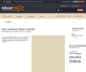 Flora medicinal chilena: tomatillo (Educarchile)