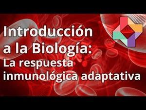 La respuesta inmunológica adaptativa