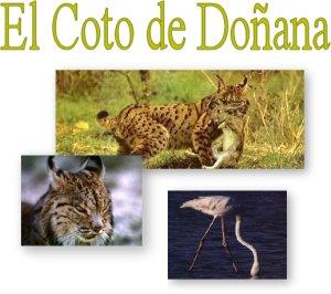 El Coto de Doñana