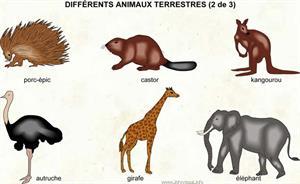 Animaux terrestres (Dictionnaire Visuel)