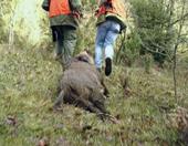 Els orígens de la caça (Edu3.cat)