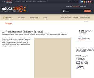 Aves amenazadas: flamenco de james (Educarchile)