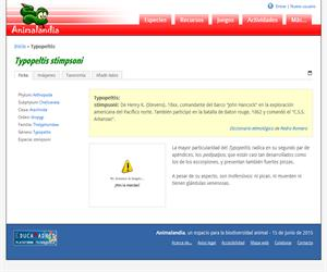 Typopeltis (Typopeltis stimpsoni)