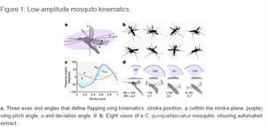 La física del vuelo inteligente del mosquito (Infografía de La Razón)