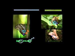 Selección natural y la mariposa búho (Khan Academy Español)