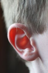 Hide and Go Listen: A Hearing Activity