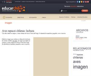 Aves rapaces chilenas: lechuza (Educarchile)