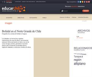 Bofedal en el Norte Grande de Chile (Educarchile)