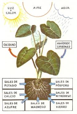Actividades interactivas para conocer las plantas