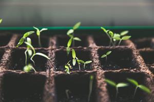 Las plantas (experimentos y ejercicios)