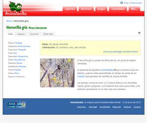 Herrerillo gris (Parus cinerascens)