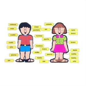 Mi cuerpo, una propuesta interdisciplinar para Infantil (sectormatematica.cl)