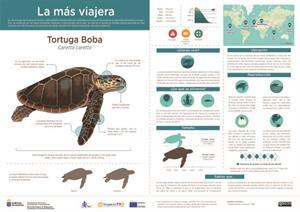 Infografía: Tortuga Boba (Gobierno de Canarias)