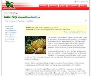 Coral de fuego (Millepora dichotoma)