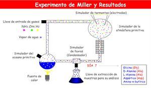 Experimento de Miller y resultados. Origen de la vida