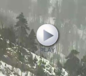 Pirineo: Nuestros bosques alpinos (Bosques Españoles)