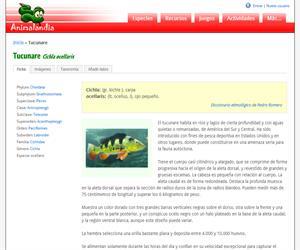 Tucunare (Cichla ocellaris)