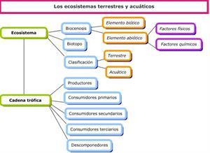 Los ecosistemas (CEIP Mariano Castillo)