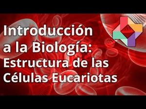 Estructura de las células eucariotas