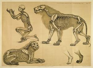A Comparative View of the Human and Animal Frame (Esqueleto humano comparado con el de animales)