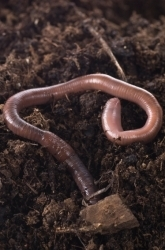What Do Worms Eat? A Compost Project