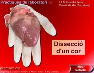 Disecció d'un cor (Disección de un corazón)