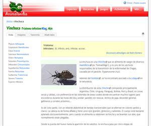 Vinchuca (Triatoma infestans)