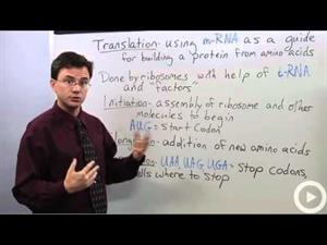 Biology Translation