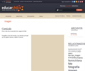 Cernícalo (Educarchile)