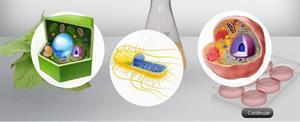Experimenta con el ADN (Xplore Health)