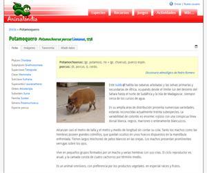 Potamoquero (Potamochoerus porcus )