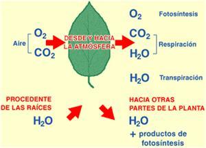 Transformación de sustancias químicas en la fotosíntesis (profesorenlinea.cl)