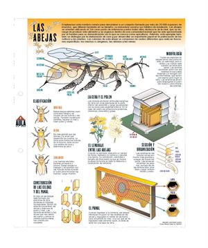 Las abejas. Láminas de El Mundo