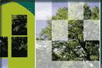 Rompecabezas de los árboles más comunes (edufores.org)