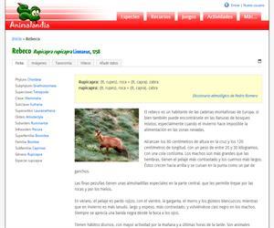 Rebeco (Rupicapra rupicapra )