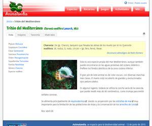 Tritón del Mediterráneo (Charonia nodifera)