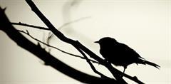Los  pájaros  holgazanes - Francisco Izquierdo Ríos (PerúEduca)