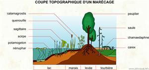 Marécage (Dictionnaire Visuel)