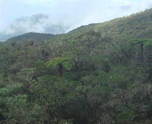 Découvrir un écosystème : la forêt