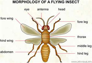 Insect  (Visual Dictionary)