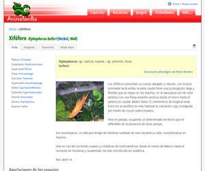 Xifóforo (Xiphophorus helieri)
