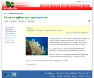 Vara de mar espinosa (Muricea elongata)