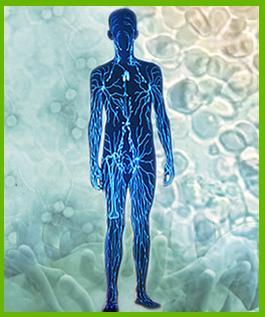 El sistema inmune humano (Educarchile)