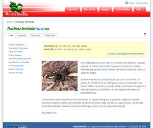 Trochosa terricola (Trochosa terricola)