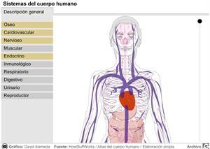 Sistemas del cuerpo humano (elmundo.es)
