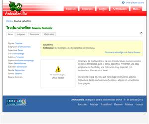 Trucha salvelino (Salvelino fontinalis)