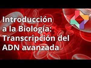 Transcripción del ADN avanzada
