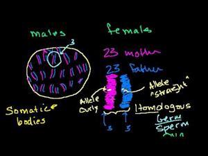 Variación en una especie (Khan Academy Español)