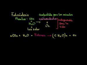Fotosíntesis (Khan Academy Español)